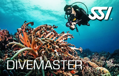 15 divemaster title