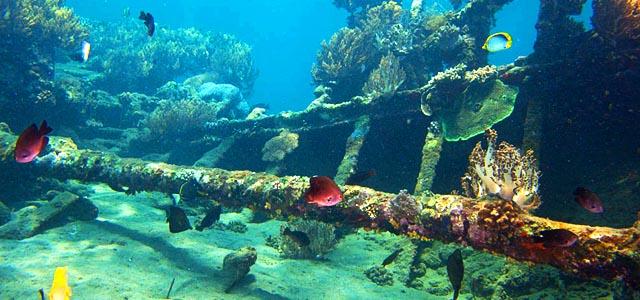 Evolution diver tulamben le jardin de corail - Prix plongee bali ...